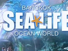 Sealife Bangkok Ocean World Run Baby